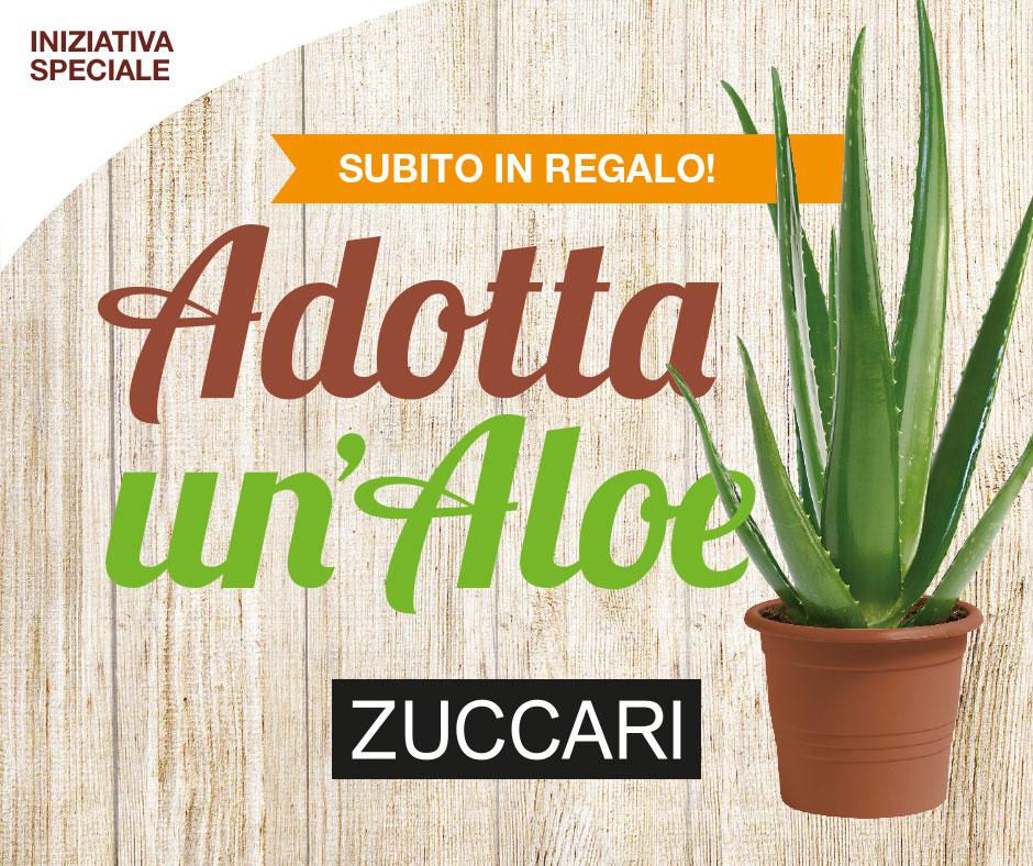 zuccari_aloe.jpg
